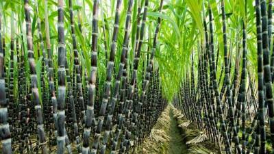 indian-sugar-production-up-by-3-56-mt-as-on-31-may-2021-english.jpeg