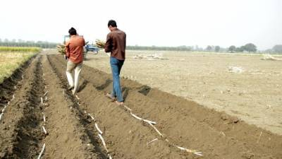 indian-sugarcane-acreage-estimated-52-28-lakh-hectares-during-2020-21-season-says-isma-english.jpeg