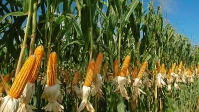 indias-first-advance-estimates-144-52-million-tonnes-of-major-kharif-crops-for-2020-21-hindi.jpeg