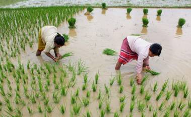 indias-kharif-crops-sowing-area-up-by-21-2-at-691-86-lakh-hectares-english.jpeg