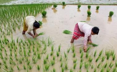 indias-kharif-sowing-increased-by-5-71-at-1113-63-lakh-hectares-area-marathi.jpeg