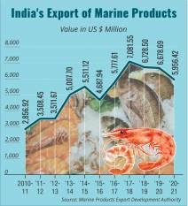 indias-seafood-exports-down-10-88-at-1-14-mt-during-2020-21-english.jpeg