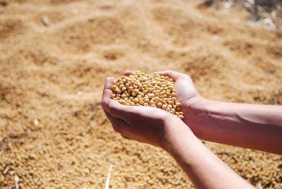 indias-soymeal-exports-up-by-86-during-august-2017-english.jpeg