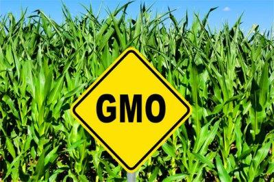 indias-tech-minister-say-on-gm-crops-in-upper-house-english.jpeg