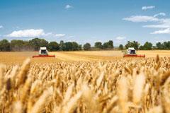 indias-total-food-grains-output-estimated-at-275-68-million-tonnes-english.jpeg