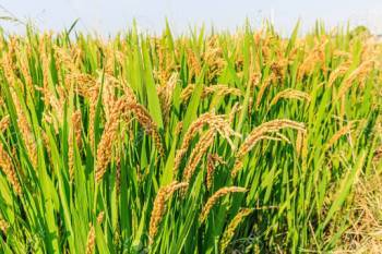 interface-meeting-for-kharif-2021-season-nutritional-security-discussed-hindi.jpeg