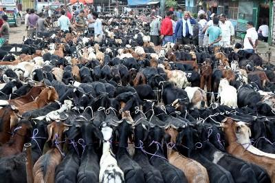 karnataka-to-launch-trading-portal-for-livestock-english.jpeg
