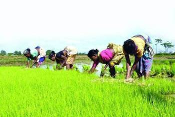 kharif-crops-sowing-increase-by-7-15-at-1082-22-lakh-ha-area-as-on-august-28-english.jpeg