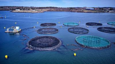 kings-infra-and-nec-corp-jointly-launch-a-proof-of-concept-for-precision-aquaculture-english.jpeg