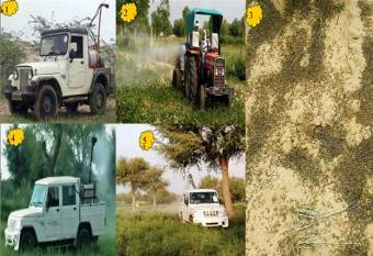 locust-control-operations-carried-out-at-10-places-in-rajasthan-2-places-in-gujarat-english.jpeg