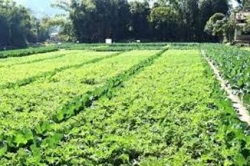 manipur-farmer-growing-vegetables-using-corrugated-galvanized-sheets-english.jpeg