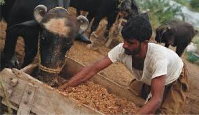 milk-producers-hails-gujarat-government-for-covid-assistance-on-export-of-skimmed-milk-powder-english.jpeg