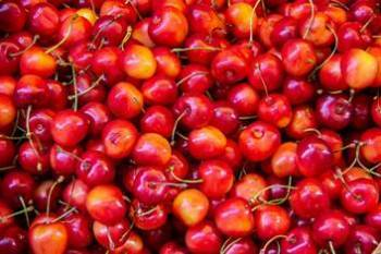 mishri-variety-of-cherries-exported-from-kashmir-to-dubai-english.jpeg