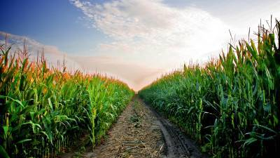 national-conference-for-rabi-targets-301-million-tonnes-of-food-grains-production-for-2020-2021-english.jpeg