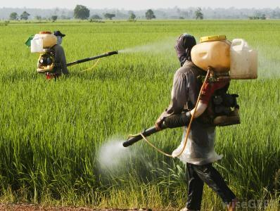negligence-in-pesticide-management-increasing-farmers-deaths-in-maharashtra-says-cse-english.jpeg