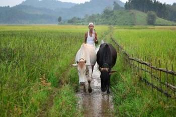 new-farm-laws-offer-more-markets-benefits-to-farmers-says-federation-of-seed-industry-of-india-executive-director-english.jpeg