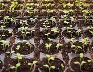 ninjacart-partners-with-kilofarms-successfully-produces-first-set-of-residue-free-tomatoes-english.jpeg