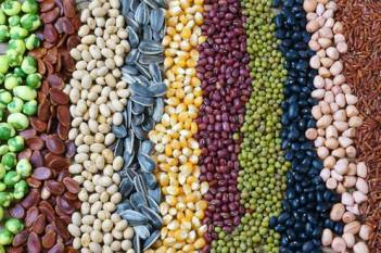 nsai-fsii-agrees-on-business-framework-on-development-of-superior-plant-varieties-by-plant-breeders-english.jpeg