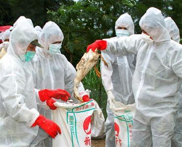 odisha-bird-flu-culling-over-in-kerang-district-english.jpeg