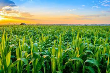 odisha-government-earmark-12-5l-hectare-farmland-8-kharif-crops-under-pm-fasal-bima-yojana-english.jpeg
