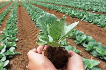 over-1-9-million-hectares-of-area-under-organic-farming-in-the-country-says-tomar-english.jpeg
