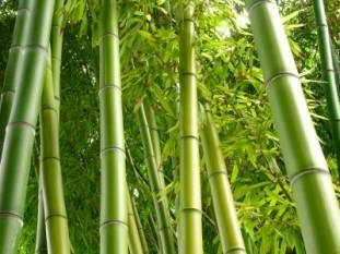 parshottam-rupala-launches-bamboo-market-page-on-gem-portal-english.jpeg
