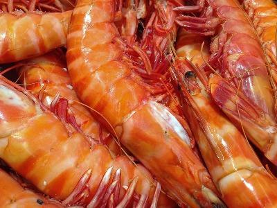 punjab-declares-50-subsidy-on-shrimp-production-english.jpeg