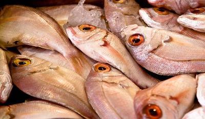 reduce-customs-duty-on-frozen-sea-food-poultry-says-assocham-plea-english.jpeg