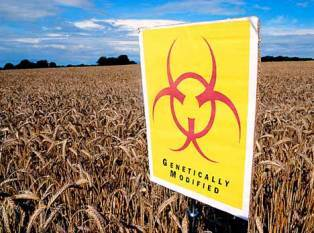 safety-and-regulation-of-gm-crops-in-india-by-dr-shivendra-bajaj-of-fsii-english.jpeg