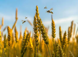 second-advance-estimates-of-production-of-foodgrains-oilseeds-and-other-commercial-crops-for-2019-20-marathi.jpeg