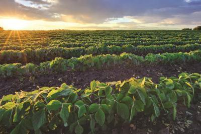 sopa-mid-term-review-keeps-soybean-crop-at-11-48-mt-english.jpeg