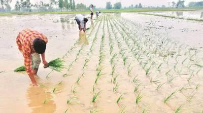 summer-crops-sowing-acreage-procurement-rises-despite-lockdown-english.jpeg