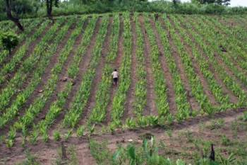 summer-sowing-increased-by-21-5-to-7-3-mn-hectares-english.jpeg