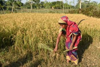 tata-cornell-institute-launches-hub-for-fpos-to-empower-small-farmers-in-india-english.jpeg