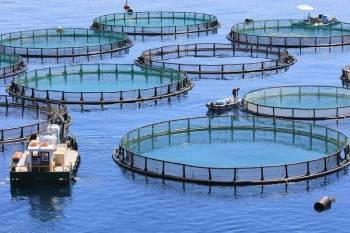 uk-opens-fisheries-market-allows-3000-indians-to-seek-jobs-without-local-tests-english.jpeg
